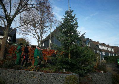 Weihnachtsbaumaktion-010